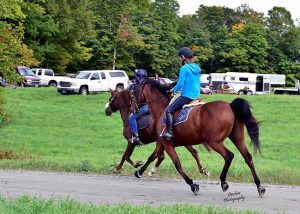 Vt Morgan Horse